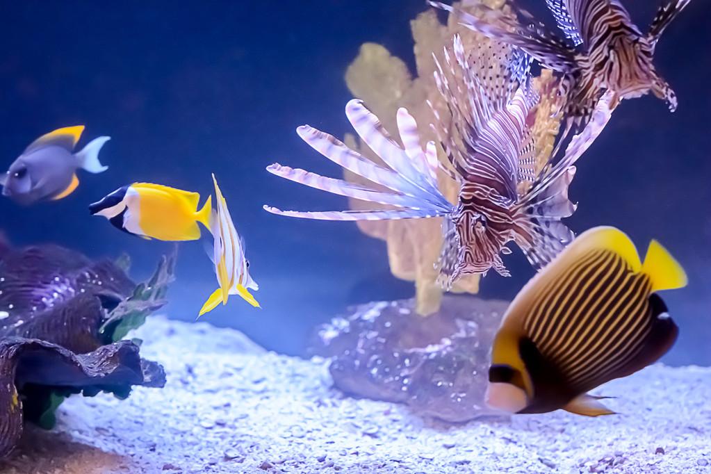 热带鱼种类